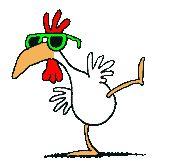 poulet plein air.jpg