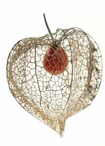 Toujours en pr vision du 14 glaudinet - Fruit cage d amour ...