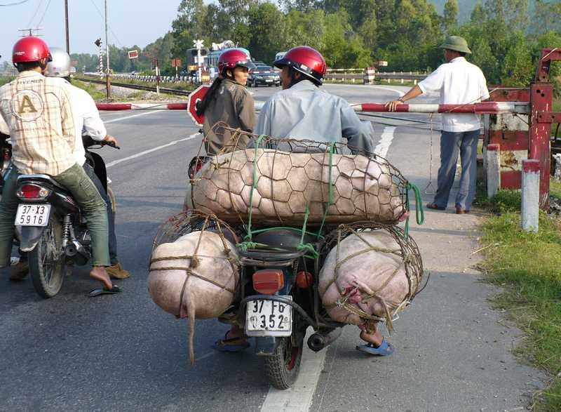 crazy_vietnam_cochon_humour