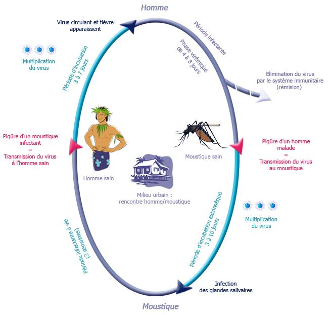 maladie de dengue